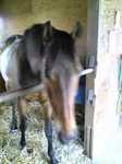 horse.up.jpg